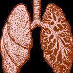 Repere de probabilitate pentru diagnosticul   bronhopneumopatiei cronice obstructive
